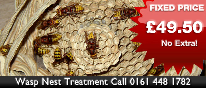 Wasp Nest Treament in Manchester Pest Control